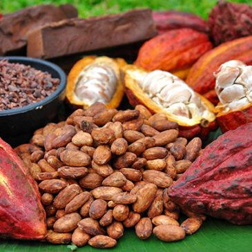África y el chocolate