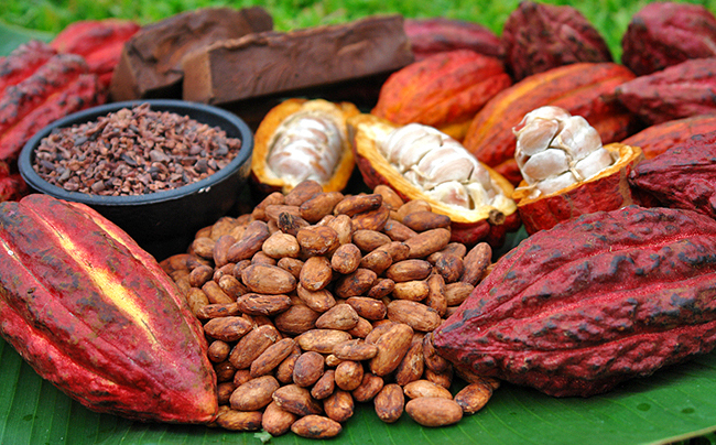 africa productores cacao